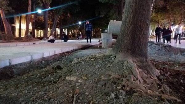 هشداری جدی؛ درخت های تنومند چهارباغ عباسی در معرض نابودی است