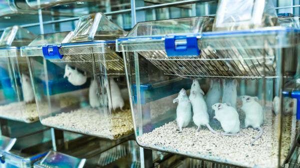 نانوذرات پوشش دار، نوعی فیبروز ریوی را در موش ها درمان کرد خبرنگاران