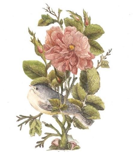 نقاشی گل و مرغ دوران قاجار بر روی کاشی با رنگ های شیشه توسط هنرمند گروه پژوهشی هنر های سنتی